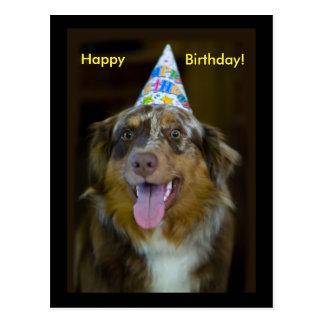 Australian Shepherd Birthday Party Dog Postcard