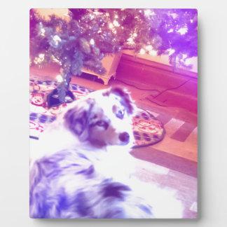 Australian Shepherd Christmas Plaque