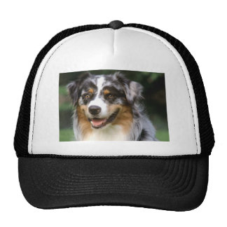Australian Shepherd Dog Cap