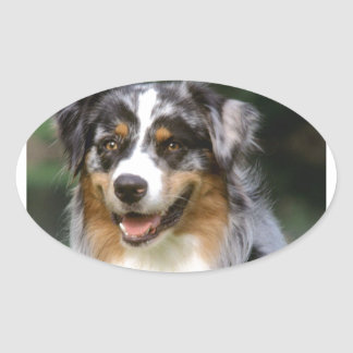 Australian Shepherd Dog Oval Sticker