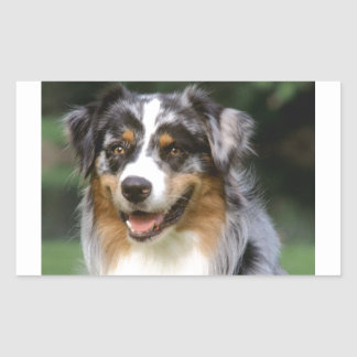 Australian Shepherd Dog Rectangular Sticker