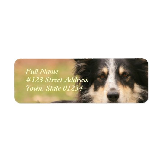 Australian Shepherd Dog Return Address Label