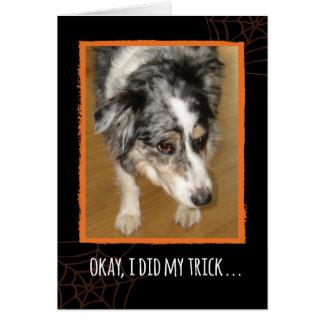 Australian Shepherd Halloween Trick and Treats Card
