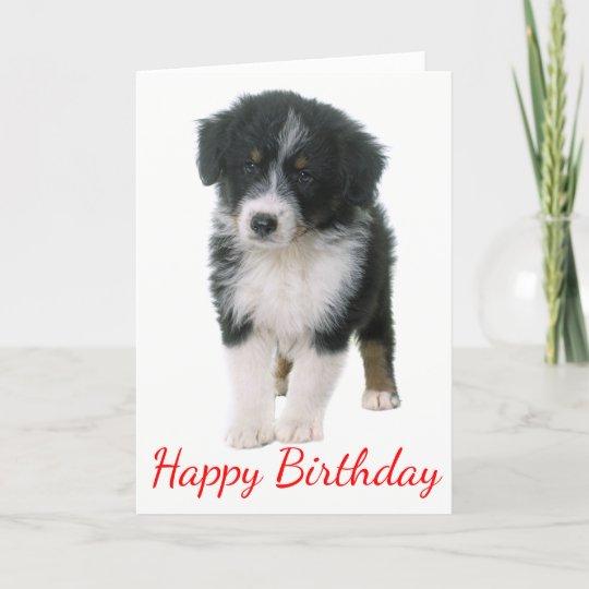 Australian Shepherd Happy Birthday Puppy Dog Card Zazzle