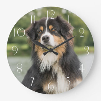 Australian Shepherd Large Clock