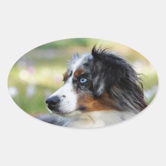 australian-shepherd oval sticker