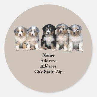 Australian Shepherd Puppies Address Label
