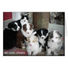 Australian Shepherd Puppies Greeting Card