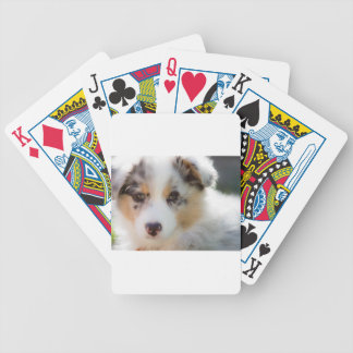 Australian shepherd puppy bicycle playing cards