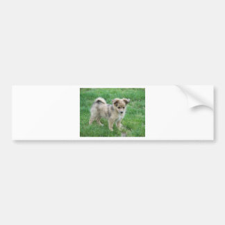 Australian Shepherd Puppy Bumper Sticker