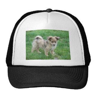 Australian Shepherd Puppy Cap