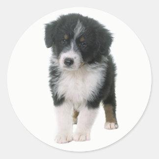 Australian Shepherd Puppy Dog Love Aussie Round Sticker