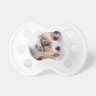 Australian shepherd puppy dummy
