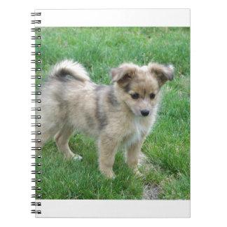 Australian Shepherd Puppy Notebook