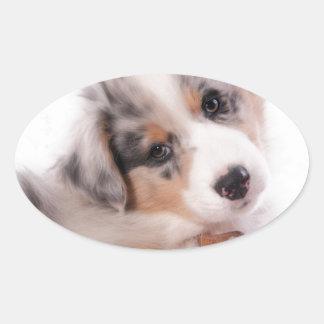 Australian shepherd puppy oval sticker