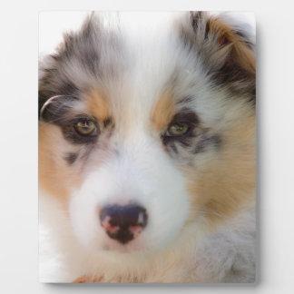 Australian shepherd puppy plaque