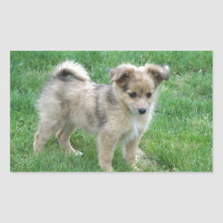Australian Shepherd Puppy Rectangular Sticker