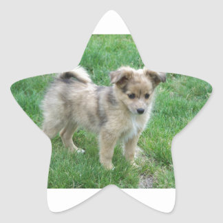 Australian Shepherd Puppy Star Sticker