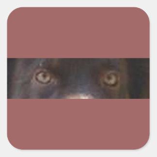 australian shepherd red tri eyes square sticker
