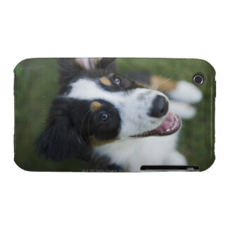 Australian Shepherd standing on hind legs iPhone 3 Case-Mate Case