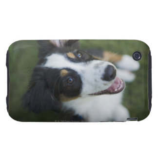 Australian Shepherd standing on hind legs Tough iPhone 3 Cover