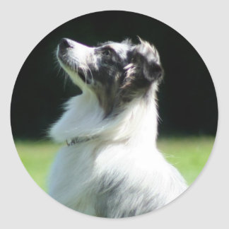 Australian Shepherd stickers