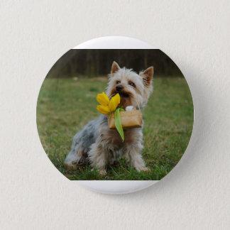 Australian Silky Terrier Dog 6 Cm Round Badge
