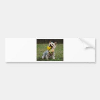 Australian Silky Terrier Dog Bumper Sticker
