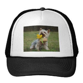 Australian Silky Terrier Dog Cap