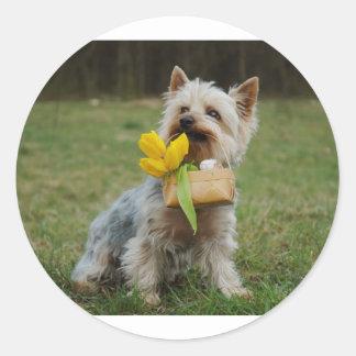 Australian Silky Terrier Dog Classic Round Sticker