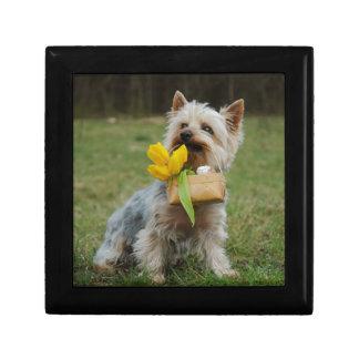 Australian Silky Terrier Dog Gift Box