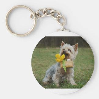 Australian Silky Terrier Dog Key Ring