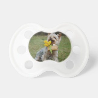 Australian Silky Terrier Dog Pacifier