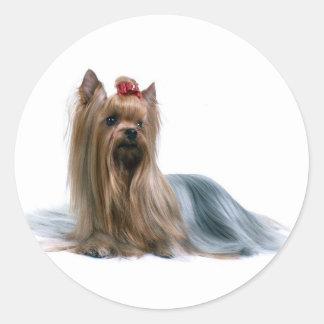 Australian Silky Terrier Dog Show Dog Classic Round Sticker