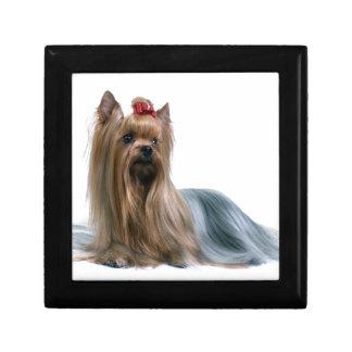 Australian Silky Terrier Dog Show Dog Gift Box