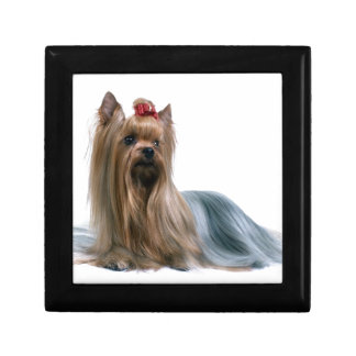 Australian Silky Terrier Dog Show Dog Small Square Gift Box