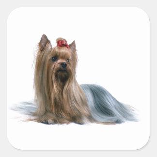 Australian Silky Terrier Dog Show Dog Square Sticker