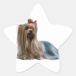 Australian Silky Terrier Dog Show Dog Star Sticker