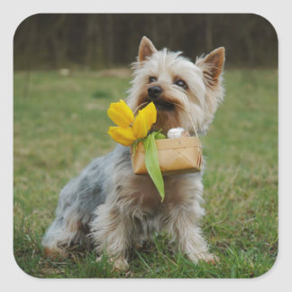 Australian Silky Terrier Dog Square Sticker