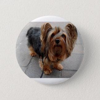 Australian Silky Terrier Puppy Dog 6 Cm Round Badge