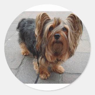 Australian Silky Terrier Puppy Dog Classic Round Sticker