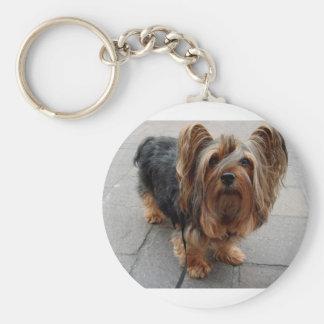 Australian Silky Terrier Puppy Dog Key Ring