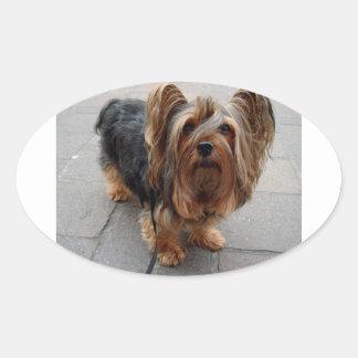 Australian Silky Terrier Puppy Dog Oval Sticker