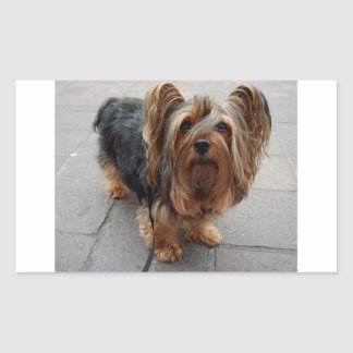 Australian Silky Terrier Puppy Dog Rectangular Sticker