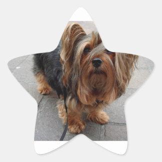 Australian Silky Terrier Puppy Dog Star Sticker