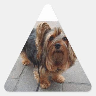 Australian Silky Terrier Puppy Dog Triangle Sticker