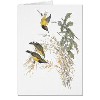 Australian Sun-bird Card