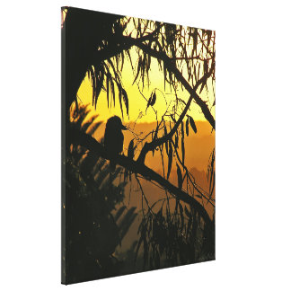 Australian Sunset Kookaburra Silhouette  Wrapped C Canvas Print
