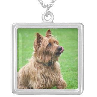 Australian Terrier dog necklace, present idea Square Pendant Necklace