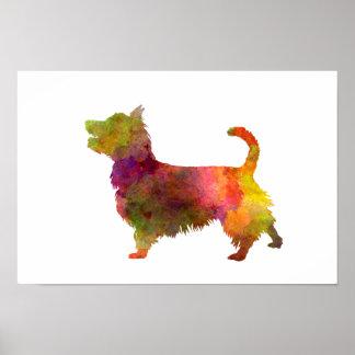 Australian Terrier in watercolor Poster